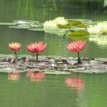 Hamanako Garden park