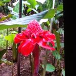 What a precious tropical flower.