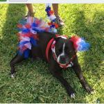 Memorial Day weekend at Ocean Grove RV Resort in St. Augustine Beach was so much fun! Games, pet