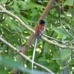 nombreux oiseaux endemiques autour du lodge