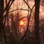 Beautiful sunset at Pench