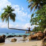 Esta foto é do famoso coqueiro torto na Praia do Aventureiro!Lugar maravilhoso!
