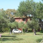 House in the olive grove