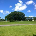 Palmetto-Pine Country Club Foto