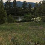 Photo de BEST WESTERN PLUS Peppertree Liberty Lake Inn