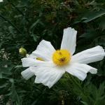 Photo de Hanbury Botanic Gardens (Giardini Botanici Hanbury)