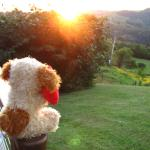 Our holiday mascot enjoying the sunset from Cabin 2 - best deck!