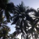 MTDC Beach Resort Ganapatipule Foto