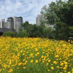 勞動公園在夏天很多漂亮的花,是值得一看的景點
