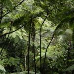 Foto de Forest Reserves Hikes