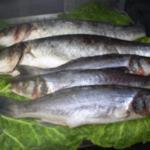 More fresh fish!
