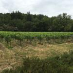 Photo of Hendry Ranch Wines