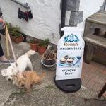 Pups at Peppercorn