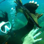 Dive Tours and Certification No experience necessary!