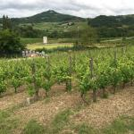 Photo of Tenuta Terensano