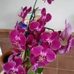 some lovely orchids