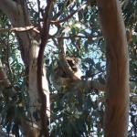 Hanson Bay Wildlife Sanctuary Foto