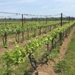 Foto di Saltwater Farm Vineyard