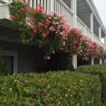 Monterey Bay Lodge Foto