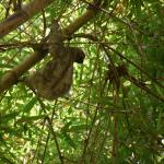Sloth in the bamboo nears Andy's house