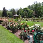 Renziehausen Park Rose Garden