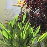 Jolie fleur de l'hôtel l'oiseau du paradis ***