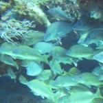 Foto de Columbia Reef