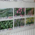 温室栽培(切り花)一覧