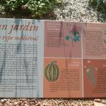 Jardins médiévaux autour de la crypte