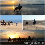 Horse, Camel and Donkey ride ! Welcome to Equievasion
