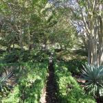 Boxwood Gardens
