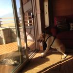 Sampson waiting to go to the beach!