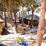 bungalow dans la pinede