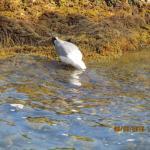 Rencontre de mouettes sur le sentier littoral de la Garoupe