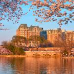 View from Tidal Basin with Cherry Blossoms