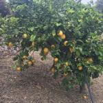 Photo of Agriturismo Villaggio La Lista