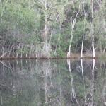 Back pond