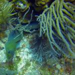 Moral eel