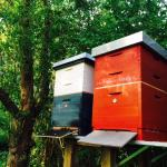 landhaus Bienen
