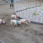 piglet racing at Bear Creek Saloon