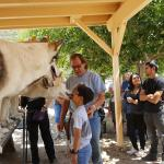 My 9 year old son kissing a wolf, this is something he still talks about 2 weeks later.