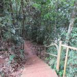 Steps down to Malanda falls
