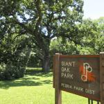 Giant Oak Park, Peoria, IL, June 2016