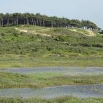 Photo of Kennemer Dunes National Park