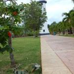 Spot the iguana!