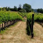 Foto de Naggiar Vineyard & Winery