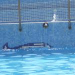 Photo of Dolphin Hotel