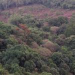 Thick forests viewed from the Kemmangundi hills