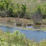 The Wildcat Glades Conservation & Audubon Center Foto