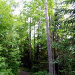 Beautiful treed paths